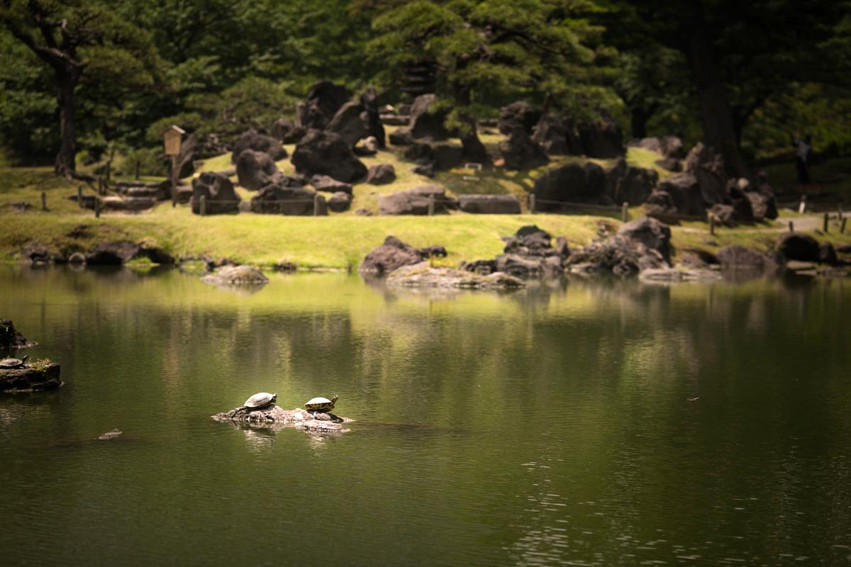 shibarikyu_photowedding014
